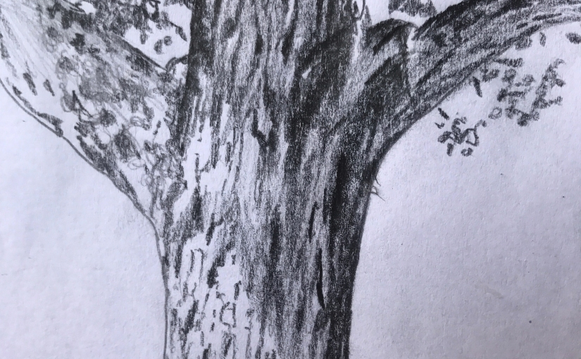 Disegnare alla Riserva naturale paludi di Ostiglia1